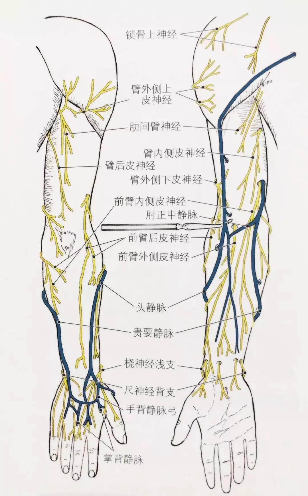 """""""上肢痛""""也许是臂丛神经被卡压了!"""